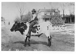 Man Riding Cow on the Square by unknown