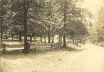 Rural Scene of Trees, Fence, and Road near Atkins Farm 2 by unknown