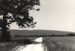 Land, Road, and Trees by Rayford B. Taylor